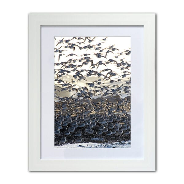 Birds flocking on the beach - framed coastal photographic print from Seaside Emporium